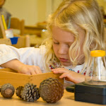 This girl is exploring pine cones, using a magnifying glass to study their texture and colors.