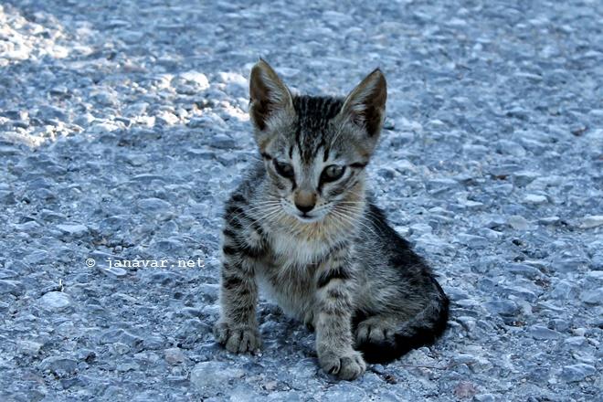 Reisen: Fotos von den Katzen auf Kos, Griechenland