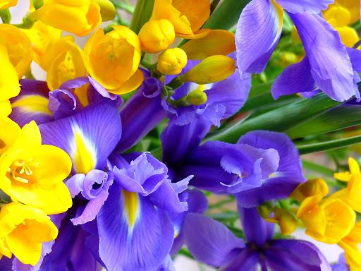 Orchidea_flowers_wallpapers.jpg