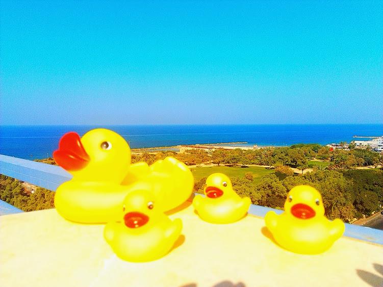 Уточки принмают солнечные ванны