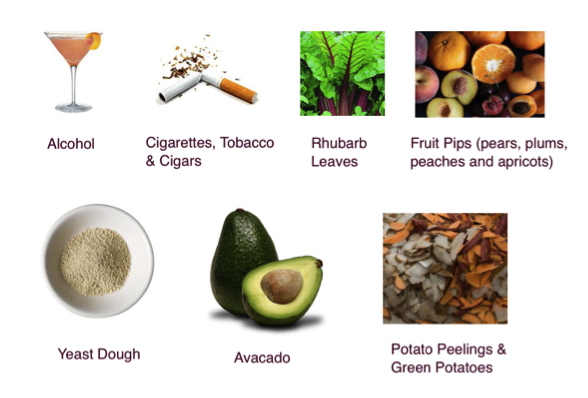 Toxic poisonous foods and substances harmful to dogs and pets