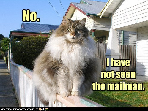 photo of a fat cat sitting on a fence: no, I have not seen the mailman