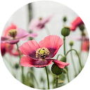WildflowerSRQ