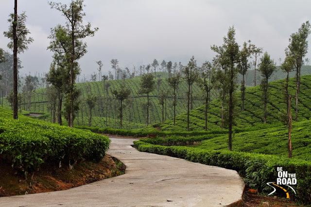 Tea estates of Valparai