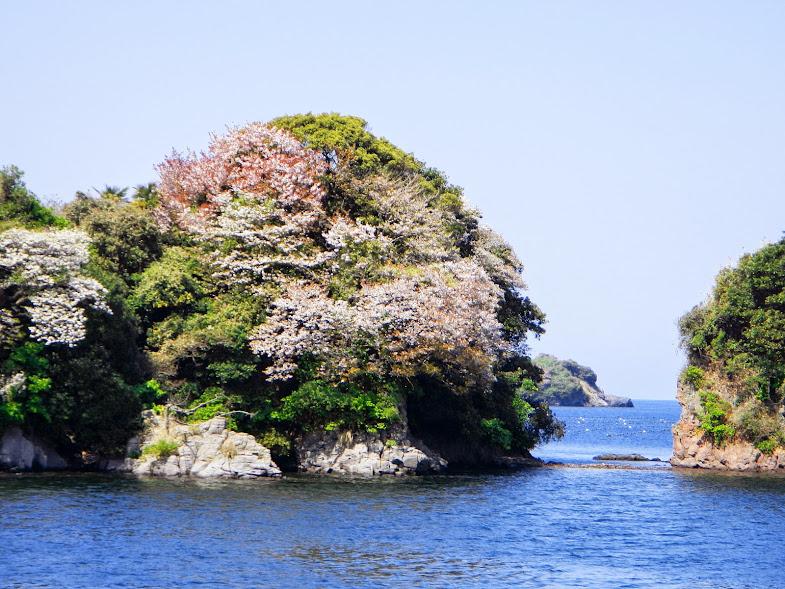 壱岐の海桜