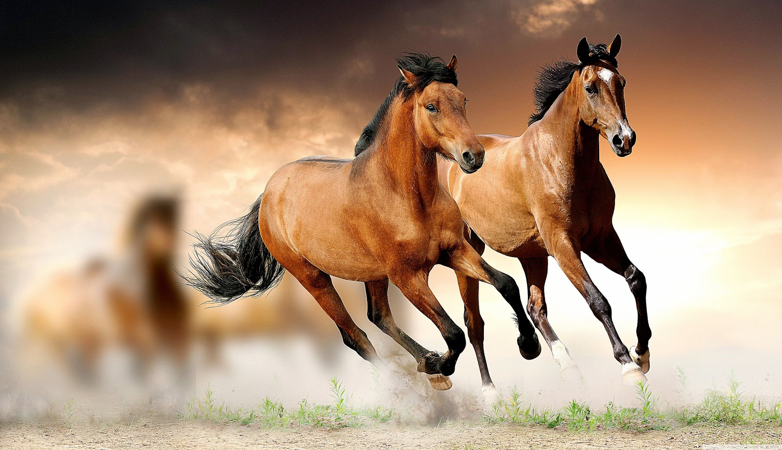 Fantastic   Wallpaper Horse Glitter - horses-running-hd-desktop-wallpaper-high-definition-fullscreen  Pictures_494189.jpg