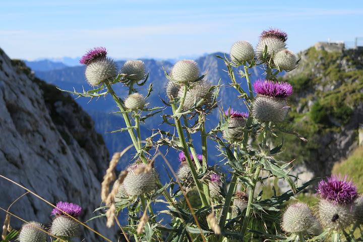Die Pflanzenwelt in den Alpen ist besonders interessant