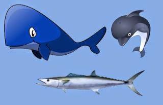 Los delfines, la ballena y la caballa fabula de animales