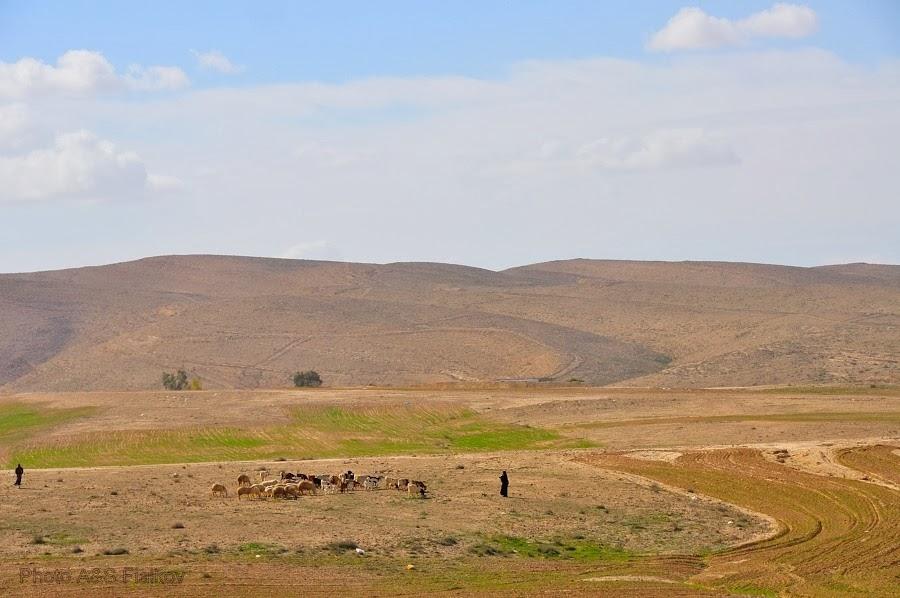 Экскурсия в Негев. Гид Светлана Фиалкова. Бедуины, Пейзаж без времени.