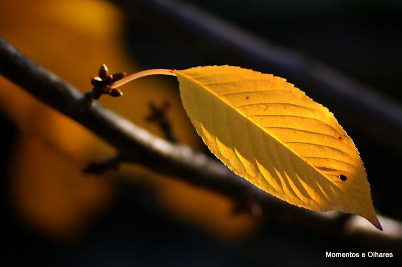 Adeus ao Outono