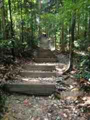 Bukit Timah Trail