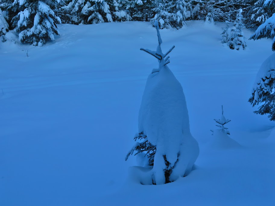 Kleine Bäume verschwanden fast vollständig unter dem Schnee