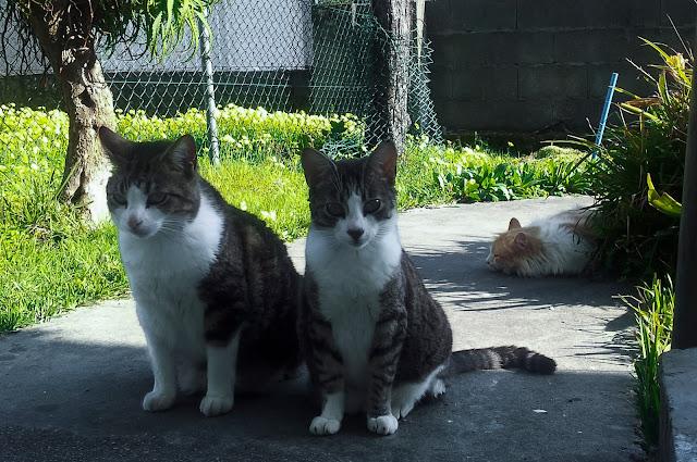 Tres Gatos Tres