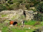 Ο σκύλος φύλακας για τα ζώα στην περιοχή Καμίνια