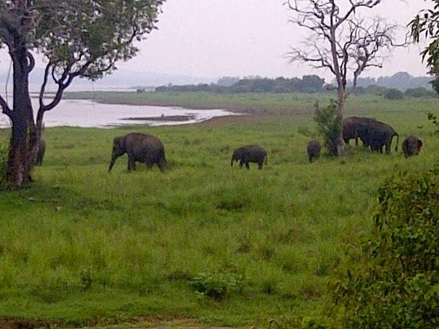 viajar não é um luxo - Sri lanka