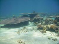 coral reef in Guindulman, Bohol