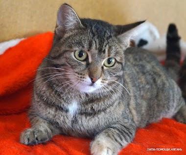 Софа молодая кошечка от года до двух лет.