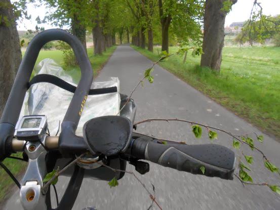 Birkenzweig am Fahrradlenker auf einer Allee im Münsterland