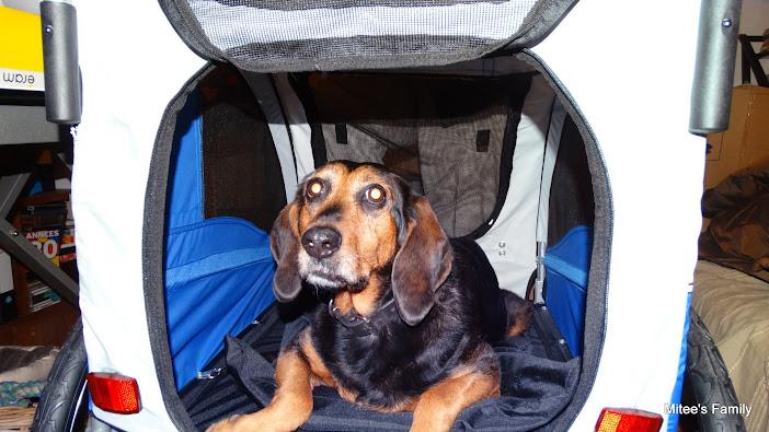 Modes de transport pour petits / vieux chiens qui fatiguent vite - Page 3 DSC02406