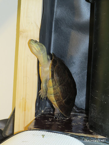 mes tortues (BK) - Page 10 IMG_2144