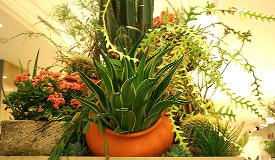 Agave cactus garden, Macy's Flower Show