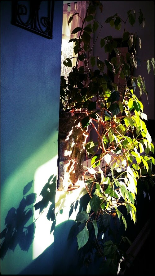 plant in the light
