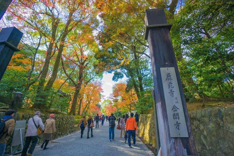 京都 紅葉 金閣寺 写真1