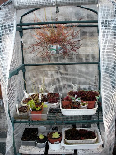 some carnivorous plants