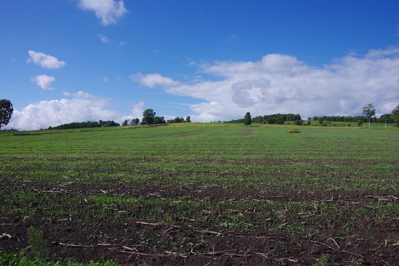 写真:燕麦が育ち始めたエリア