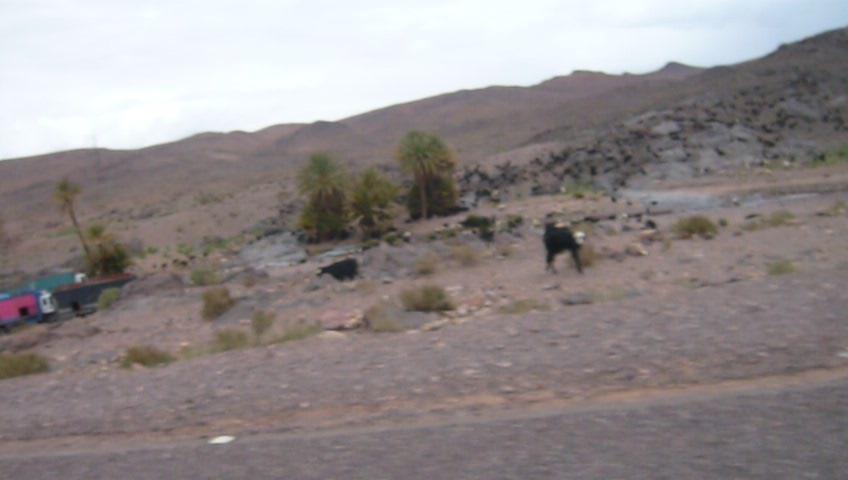 O meu Marrocos Abril 2012 L1010237