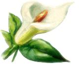 blomster%252520%2525281476%252529.png?gl=DK