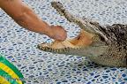 Ban Chivit crocodiles show