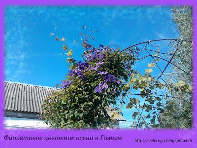 Фиолетовое цветение осени