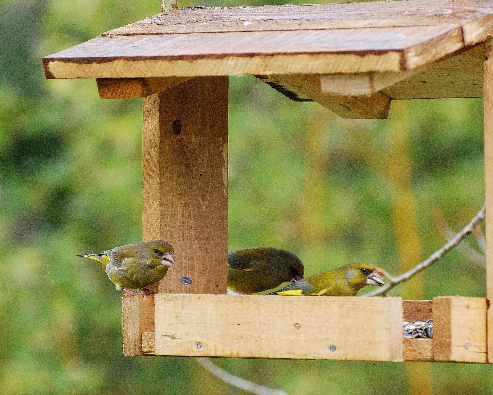 Top La voliera senza sbarre: Come costruire una mangiatoia per Uccelli TQ44