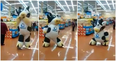 Vaca mascote faz dança impressionante em supermercado mexicano