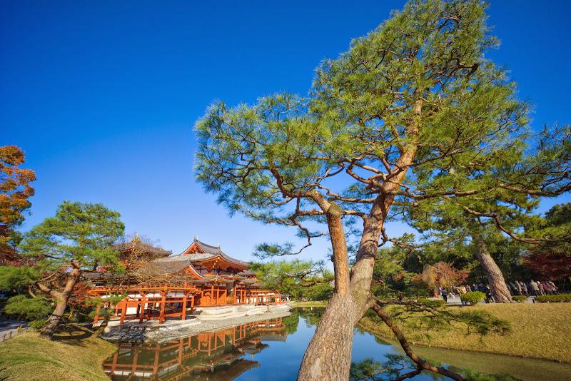 京都 紅葉 平等院鳳凰堂 写真4