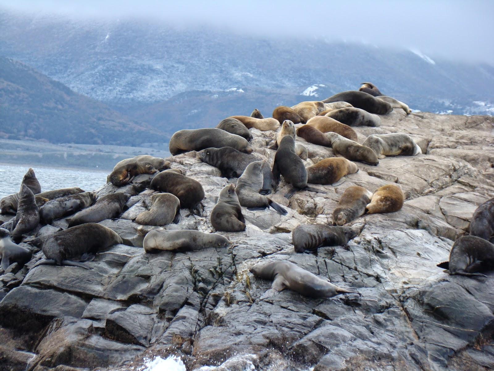 Canal de Beagle, Ushuaia, Argentina, Elisa N, Blog de Viajes, Lifestyle, Travel