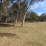 Edge of gum tree grove at Wares Yards