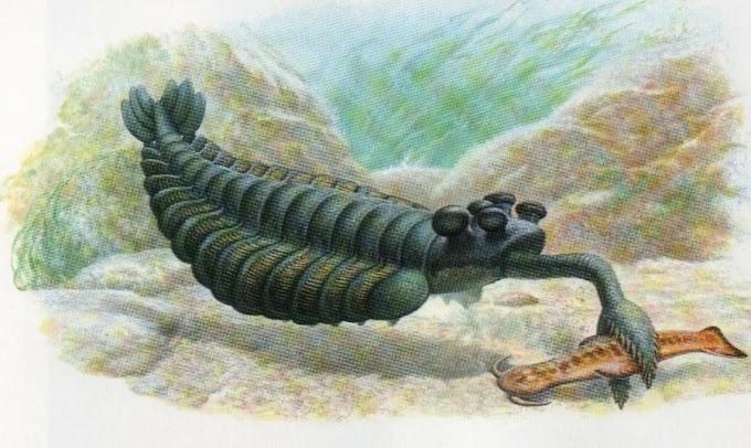 Почему кембрийские существа выглядят так странно?