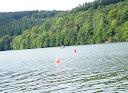 Wald am Kronenburger See
