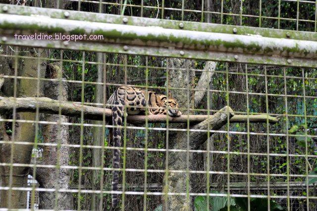 Zoo-Melaka