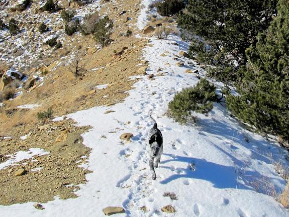 Cooper running along a ridge