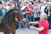 Foto caballos a pelo