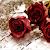 bipinsinh roz