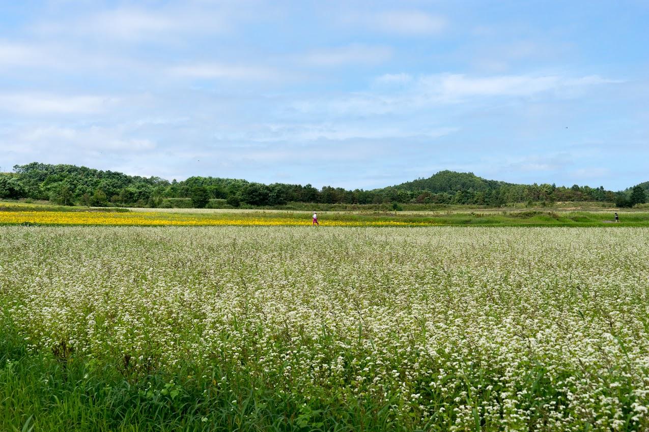 北竜町の田園風景