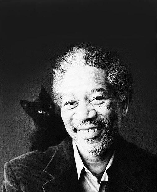 Morgan Freeman and a cat 1