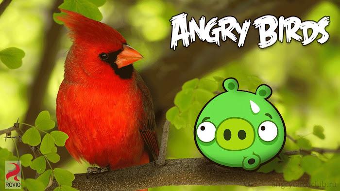 Hình nền về những chú chim điên trong Angry Birds - Ảnh 16