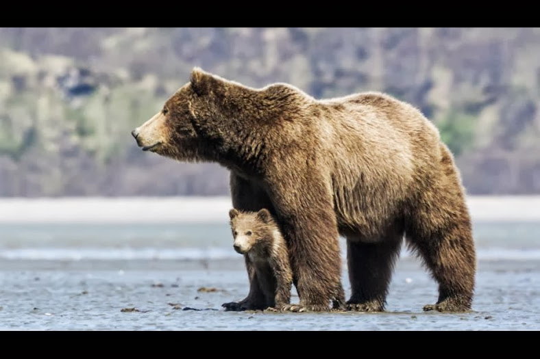 Entertainment Roundup: Disneynature's Bears - Earth Day, 2014