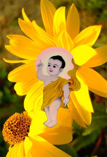 Tìm hiểu ngày sinh của Đức Phật Thích Ca