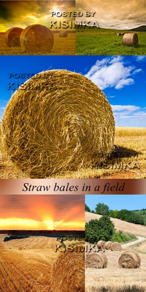 Stock Photo: Straw bales in a field